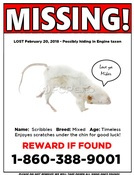 Missing - Scribbles the Mouse